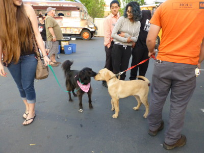 Food truck diners with dogs